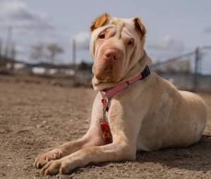 dog abandoned on train tracks rescued