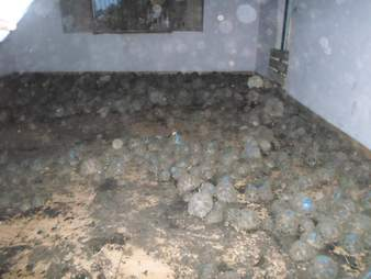 Endangered tortoises covering a room in a Madagascar house