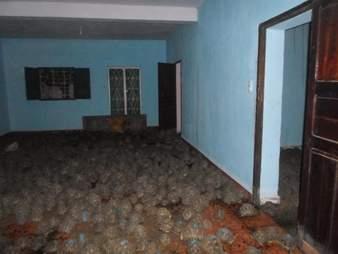 Radiated tortoises filling room in Madagascar