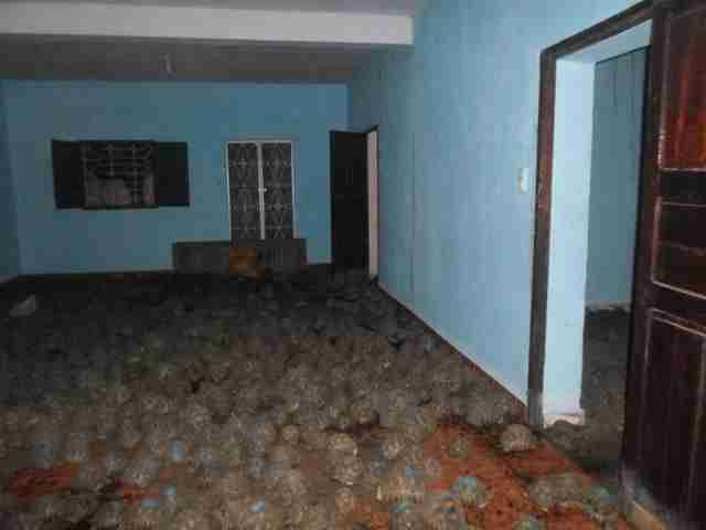 Radiated tortoises filling room in Madagascar