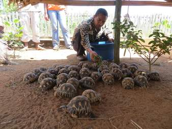 Man caring for rescued tortoises