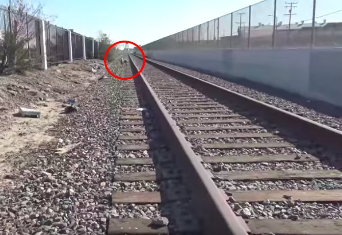 Dog Living On Train Tracks Was Too Scared To Let Anyone Near Her