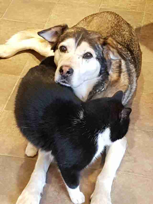 Rescued 'feral' cat with rescue dog