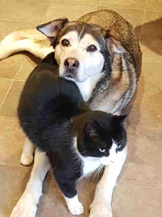 Rescued 'feral' cat with rescue dog BFF