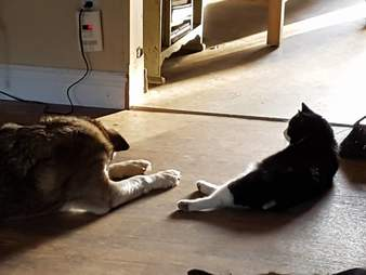 Rescued 'feral' cat with dog BFF