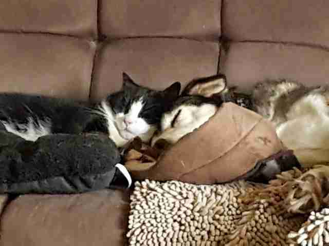 Rescued 'feral' cat snuggling with rescue dog