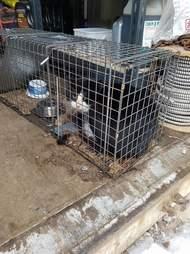 'Feral' cat in cage at Ontario animal sanctuary