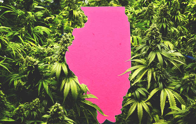 Everything You Need to Know About Legal Weed in Chicago