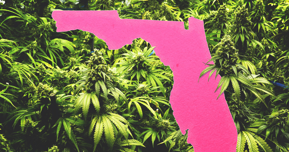 How to Get Medical Marijuana in Florida: Where to Get Legal Weed - Thrillist