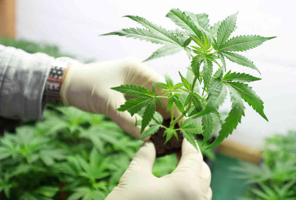How to Get Medical Marijuana in Pennsylvania: Where to Get