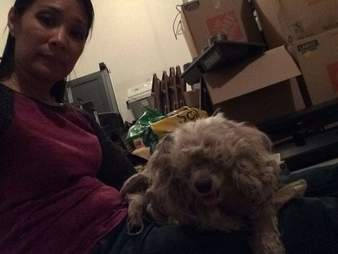 matted poodle mix rescue texas