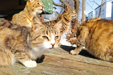 feral cats shot iowa