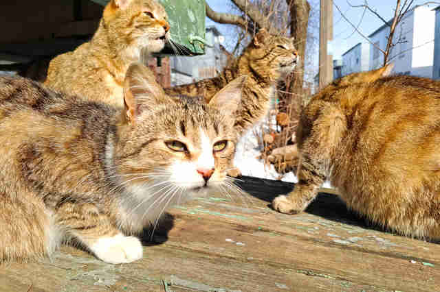 feral cats shot iowa