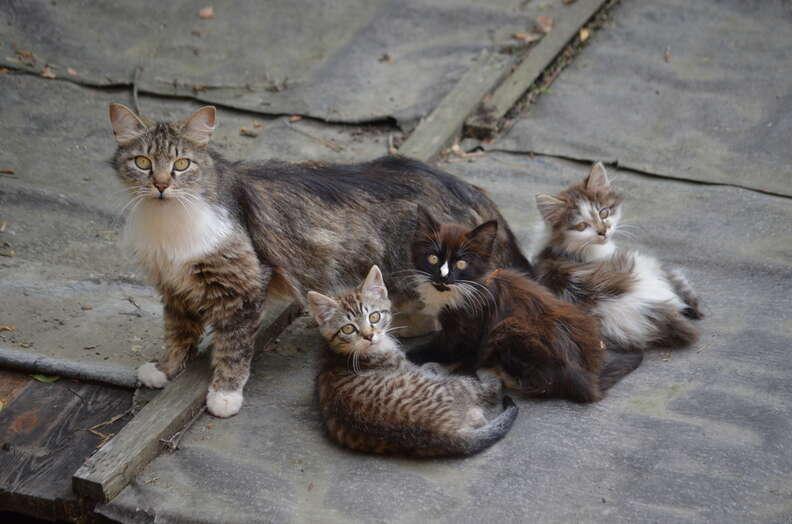 iowa feral cat shootings