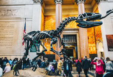 Dinos! Nukes! Nudes! The Best Museums in NYC