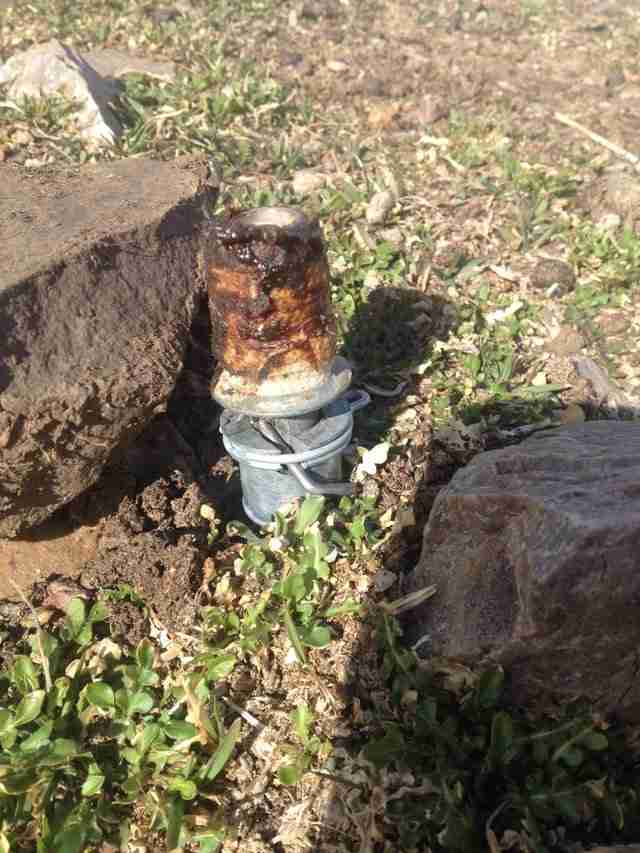 M-44 cyanide device that killed a family dog in Idaho