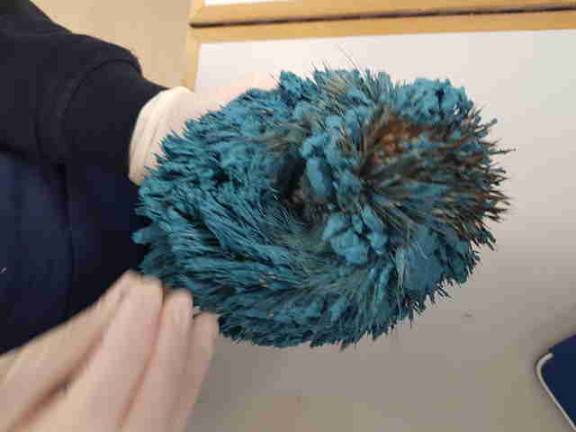 hedgehog covered in blue paint