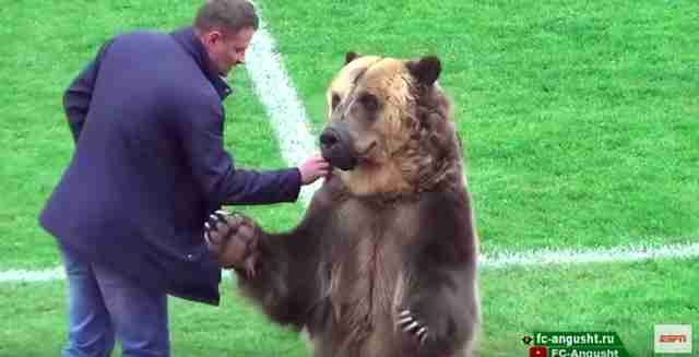 Trainer feeding captive bear a treat