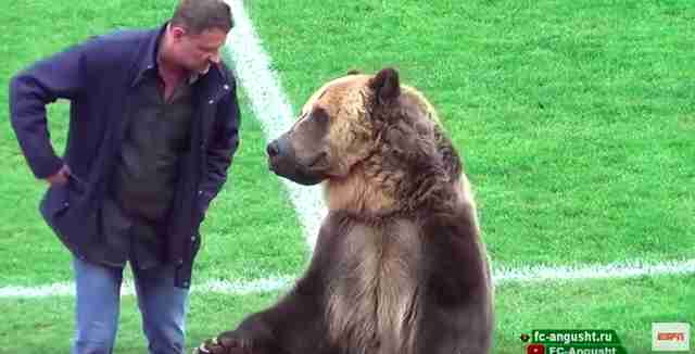 Captive bear forced to perform at soccer game