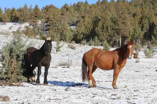 Wild horse couple reunited at Oregon sanctuary