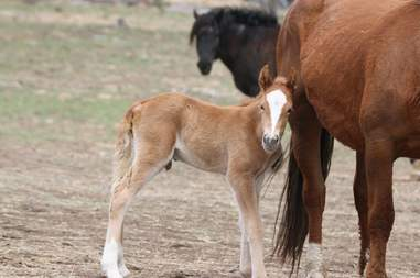 Foal born to wild horse couple reunited at sanctuary in Oregon