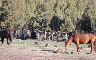 Wild horse family at Oregon sanctuary
