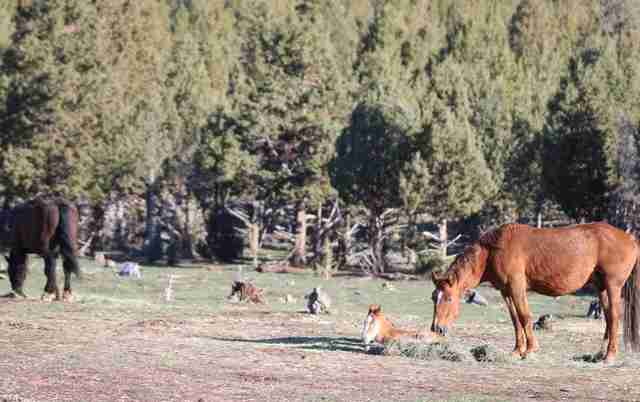 Wild horse family at Oregon sanctuary