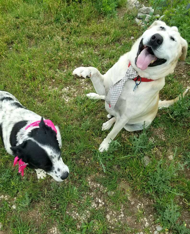 Rescue dogs Beaux Tox and Scout play in the yard