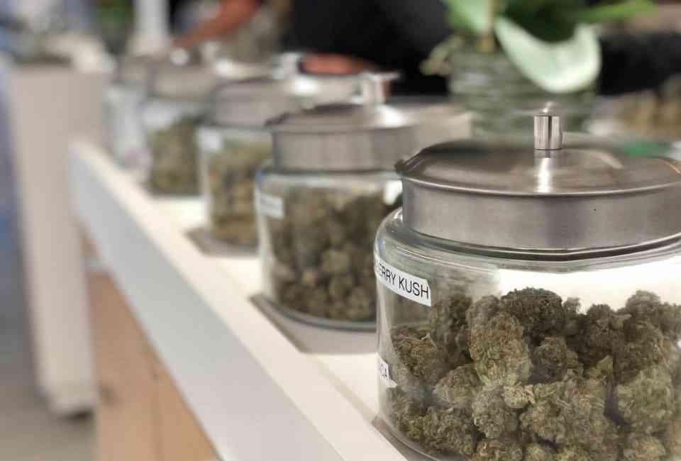 Best Recreational Marijuana Dispensaries in San Diego, California