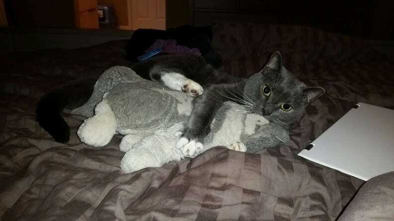 Cat wrestling with stuffed animal