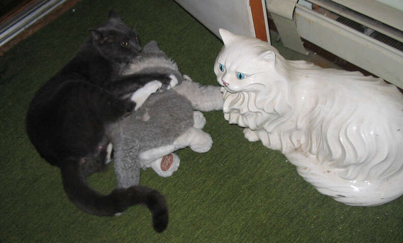 Cat cuddling with stuffed animal