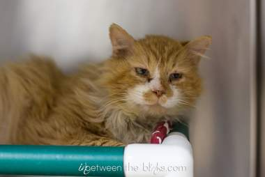 abandoned cat adopted walked