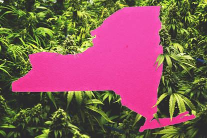 ny legal weed