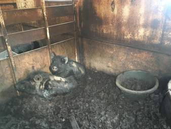 new york farm animal rescue
