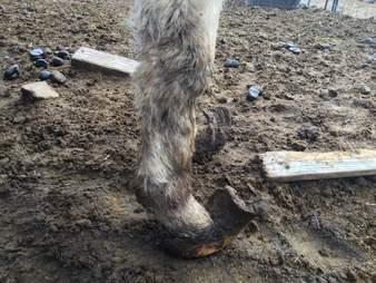 farm animal rescue new york