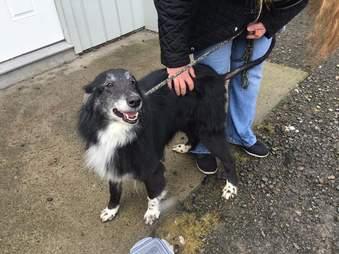 farm dog rescue new york