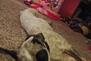 JoJo the rescue dog in front of Christmas tree