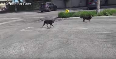 dogs rescued from the streets of Los Angeles