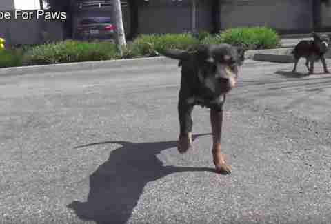 dogs rescued from streets of Los angeles