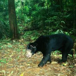 Bear getting released to forest
