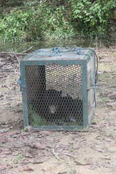 Sun bear getting returned to forest