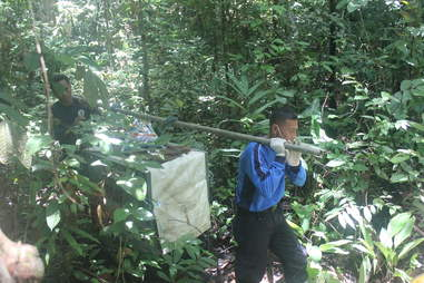 Rescuers carrying sun bear back into forest