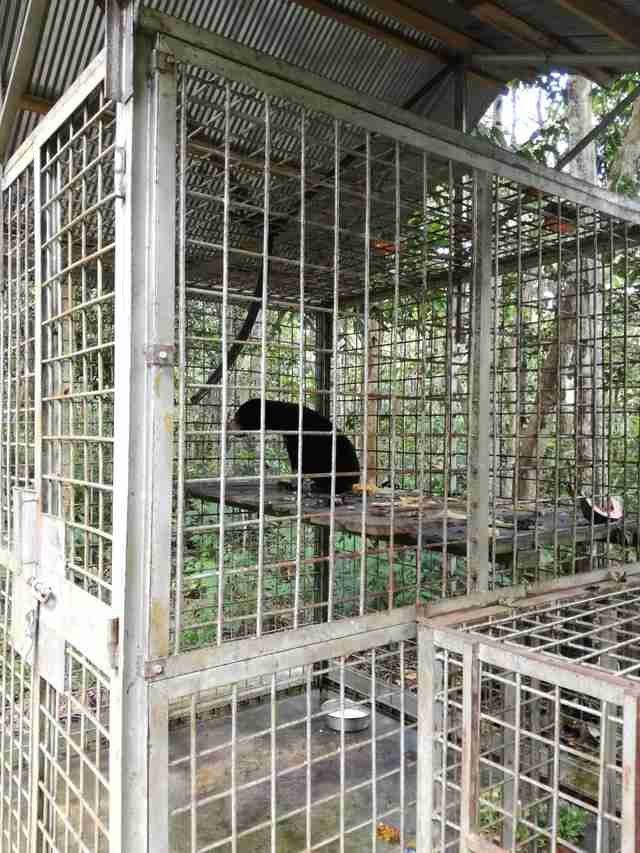 Sun bear who lost paw to snare recovering at rescue center