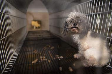 Dog in puppy mill