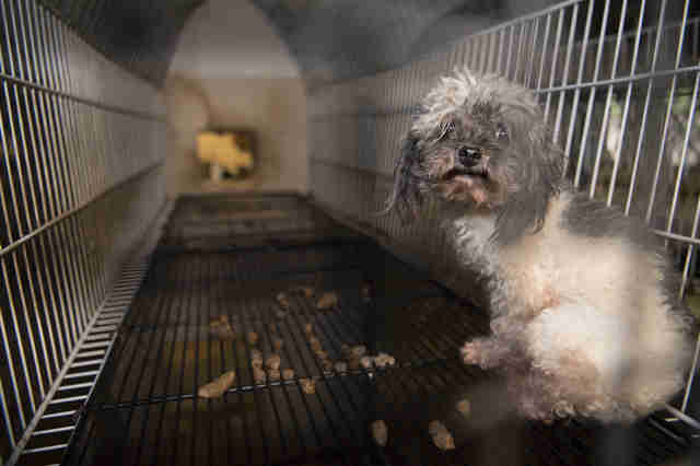 Dog in puppy mill