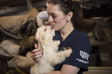 Puppy kisses rescuer saving him from puppy mill