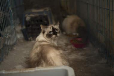 Kitten found in breeding mill