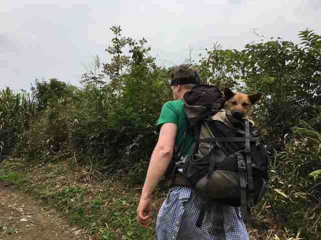 Hiker carrying dog in backpack