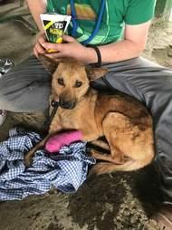 Dog with bandage on leg