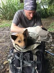 Injured dog inside backpack